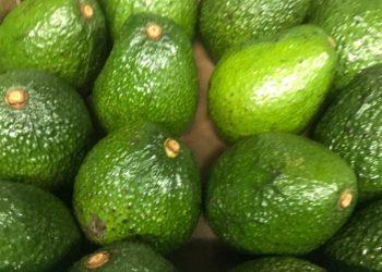 Janifresh Avocados