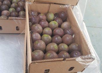 Jani Fresh Passion Fruits