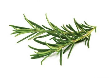 Janifresh Rosemary